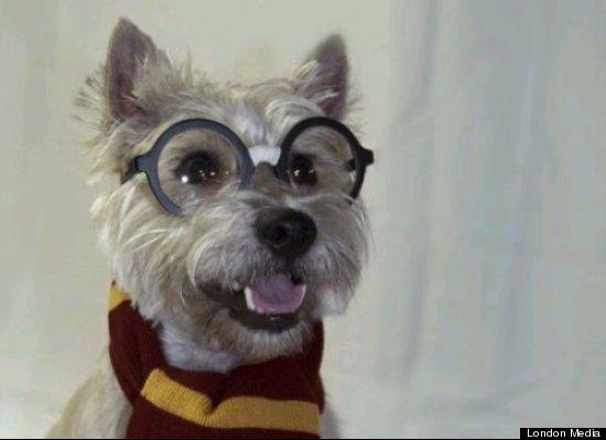 Quand les fans d'Harry Potter déguisent leurs chiens …