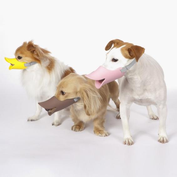 Transformez votre chien en canard