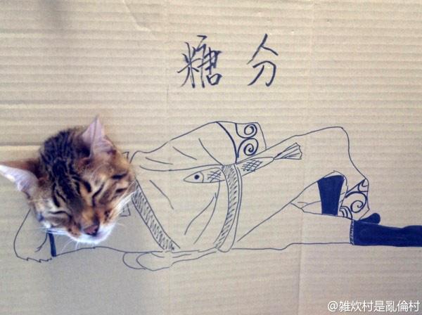 Halloween – Des costumes pour chats en carton