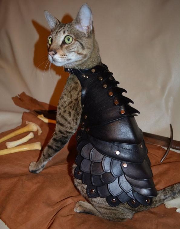 armure combat chat