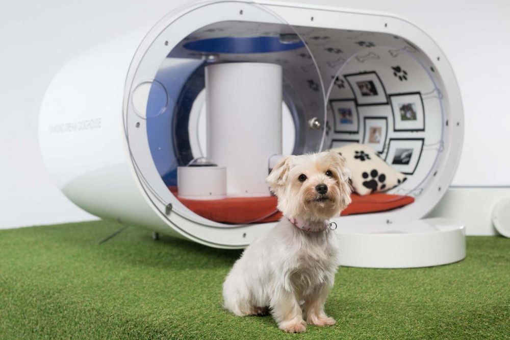 Dream Doghouse niche Samsung