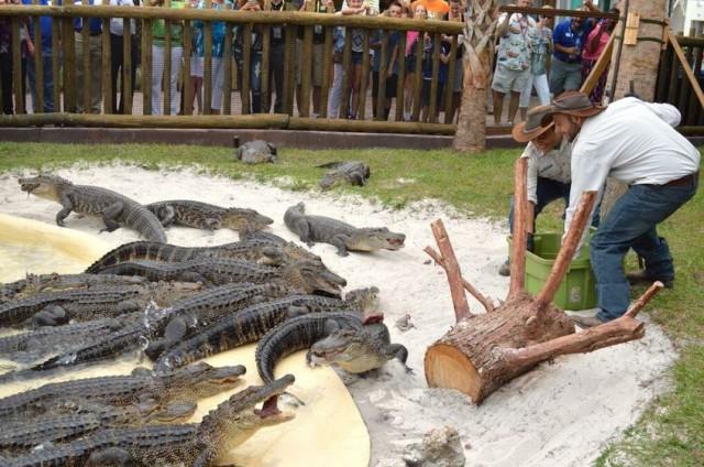 City Guide Floride Gatorland Orlando