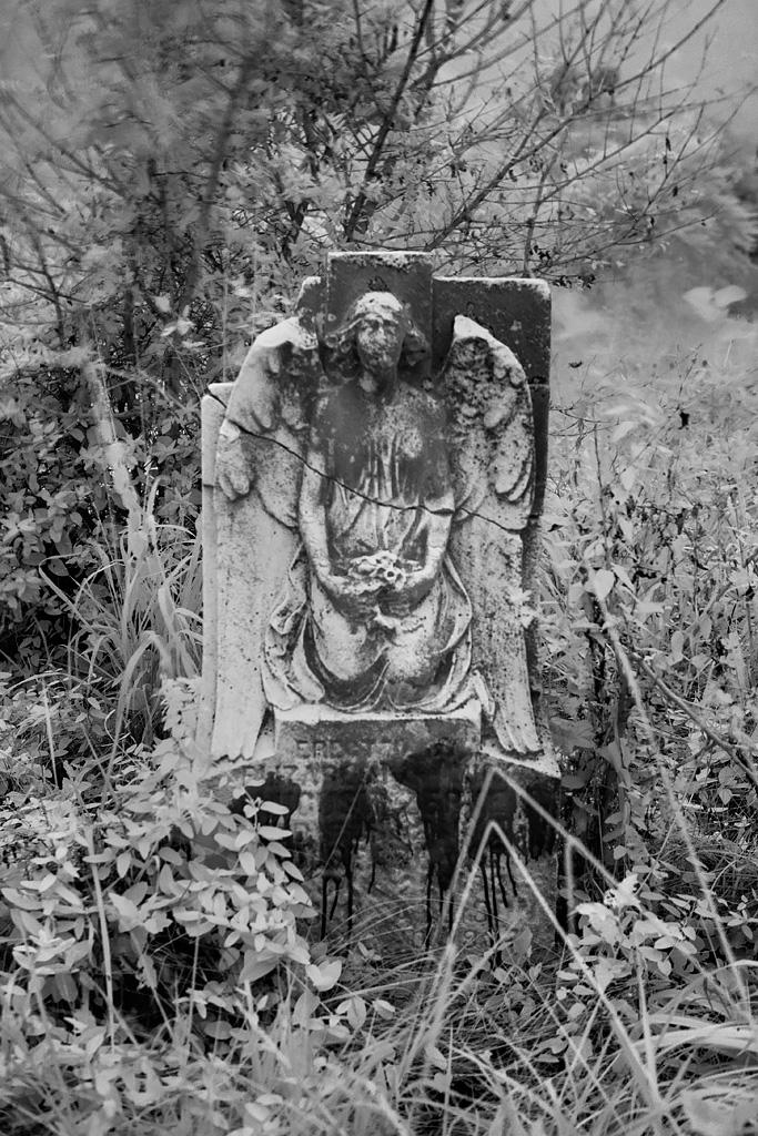 cimetière abandonné Mount Moriah