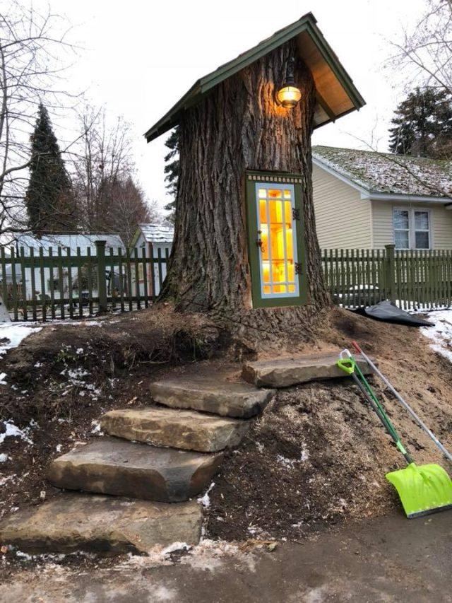 Un arbre centenaire transformé en une bibliothèque magique 1