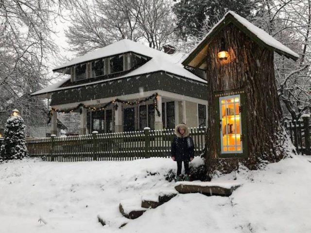 Un arbre centenaire transformé en une bibliothèque magique