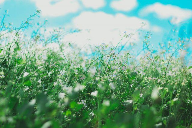 tiges d'herbes