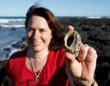 Un escargot de mer pourrait aider lutter contre le cancer