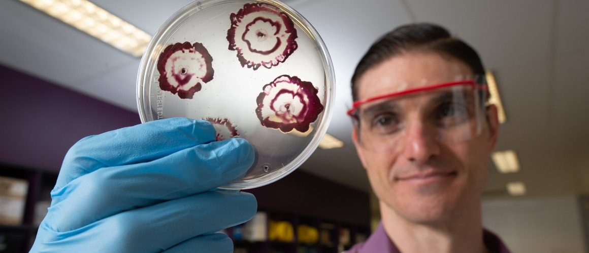 Des antibiotiques hybrides surpuissants créés à la Queensland University of Technology