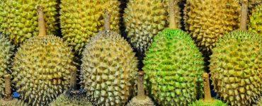 Le durian – Ce qu'il faut savoir sur le fruit le plus odorant du monde