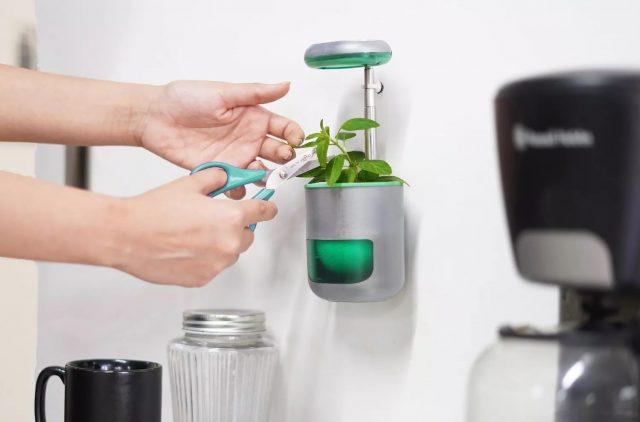 Pico – Un petit jardin qui tient dans la paume de votre main 2