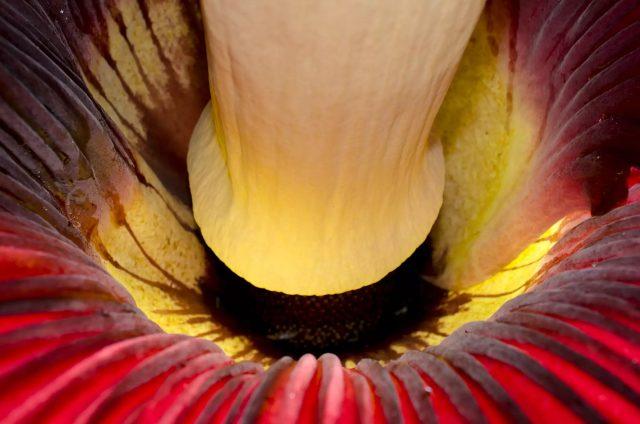 Fleur cadavre 2