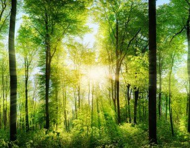 Selon une étude les sons de la nature améliorent la santé