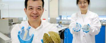 Ce pansement de durian tue les germes et guérit les blessures